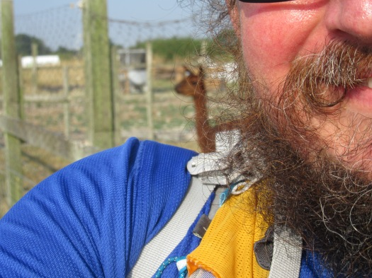 voew of a llama over my shoulder