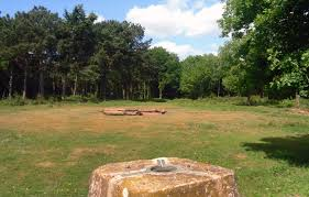 a grass clearing in woodland. In the distance, a pile of logs. In the near ground a stone trig point